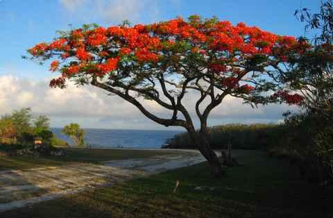 îles mariannes guam